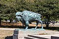 World's Fair Bison Sound of the Whoop Humboldt Park Chicago 2020-0666.jpg