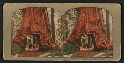 Wowona (Wawona), Mariposa Grove, Cal, from Robert N. Dennis collection of stereoscopic views 2.png