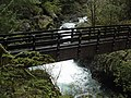 Wynoochee maidenhair falls bridge (23155703909).jpg