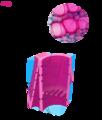 Xylem cells ta.png
