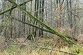 Zakole Wawerskie, las olchowy, Las, Wawer, Warszawa 007.jpg