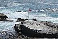 Zapallar, la costa, 2019 (05).jpg