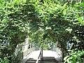 Zelkova serrata, Bercy.jpg