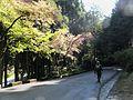 Zhushan Forest Road 祝山林道 - panoramio.jpg