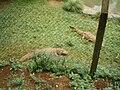 Zoológico Cascavel 70.jpg