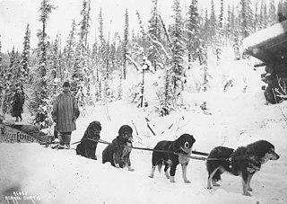 Sled dog Working dog