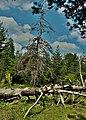 Πεσμένα δέντρα.jpg