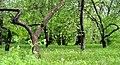 Ієрогліфи парку «Хутір Надія» №1.jpg