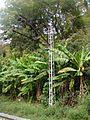 Банановые пальмы - panoramio.jpg