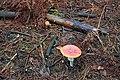 Глибокий ліс IMG 4283.jpg