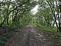 Дорога вдоль сада - panoramio.jpg