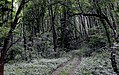 Дорога к озеру. Польській ліс.jpg