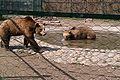 Зоолошка Скопје 48.jpg
