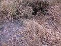 Курган №5869 біля с.Золота поляна, нора.JPG