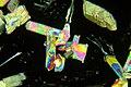 Микрокристаллы янтарной кислоты.JPG