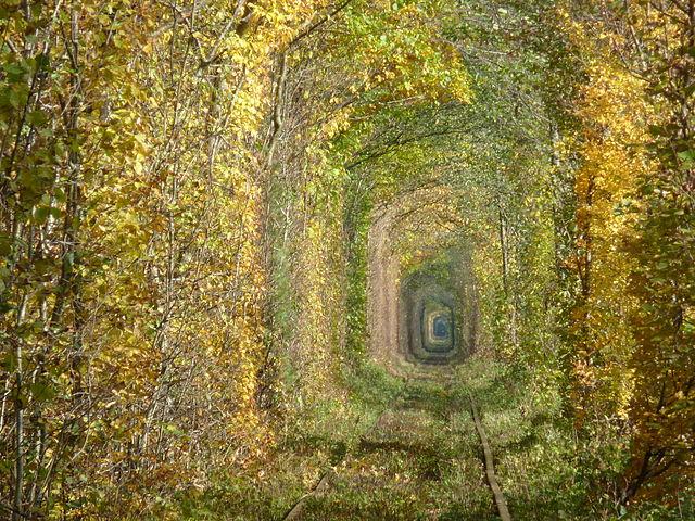 Осінь у Тунелі кохання, © Мирослава Раковець, CC-BY-SA 3.0