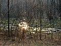 Ранок біля токовища тетеруків.jpg