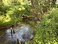 Река Упинка.jpg
