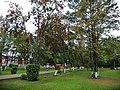 Рябина ... - panoramio.jpg