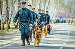 Собаки НГУ 4580 (19328625756).jpg