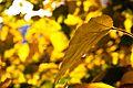 Солнечногорск, Осень - panoramio.jpg