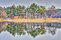 Сосны отражаются в пруду парка Партизанской славы.jpg
