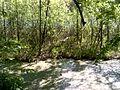 Сфагнове болото (Чорний ліс).jpg