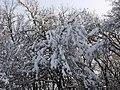 Украина, Киев - Голосеевский лес 175.jpg