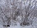 Улица Дальняя. Город Северодвинск. Остров Ягры. Фото А. Щекинова. 21.jpg