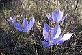 Что-то в Болгарии опять весна) (10407324633).jpg