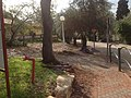 לאורך כביש 5 - מיכל מיכאלי מצלמת (8515779612).jpg