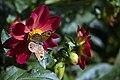 عکس از گلها و گیاهان باغ بوتانیکال تفلیس - گرجستان 45.jpg