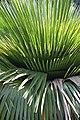 สวนสมเด็จพระนางเจ้าสิริกิติ์ (Queen Sirikit Park ) 034.jpg