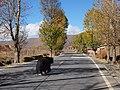不速之客 - Road Intruder - 2012.10 - panoramio.jpg