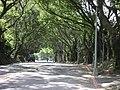 林蔭大道 - panoramio.jpg