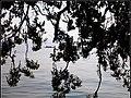 白堤随拍(一艘游船正好在树叶间经过) - panoramio.jpg