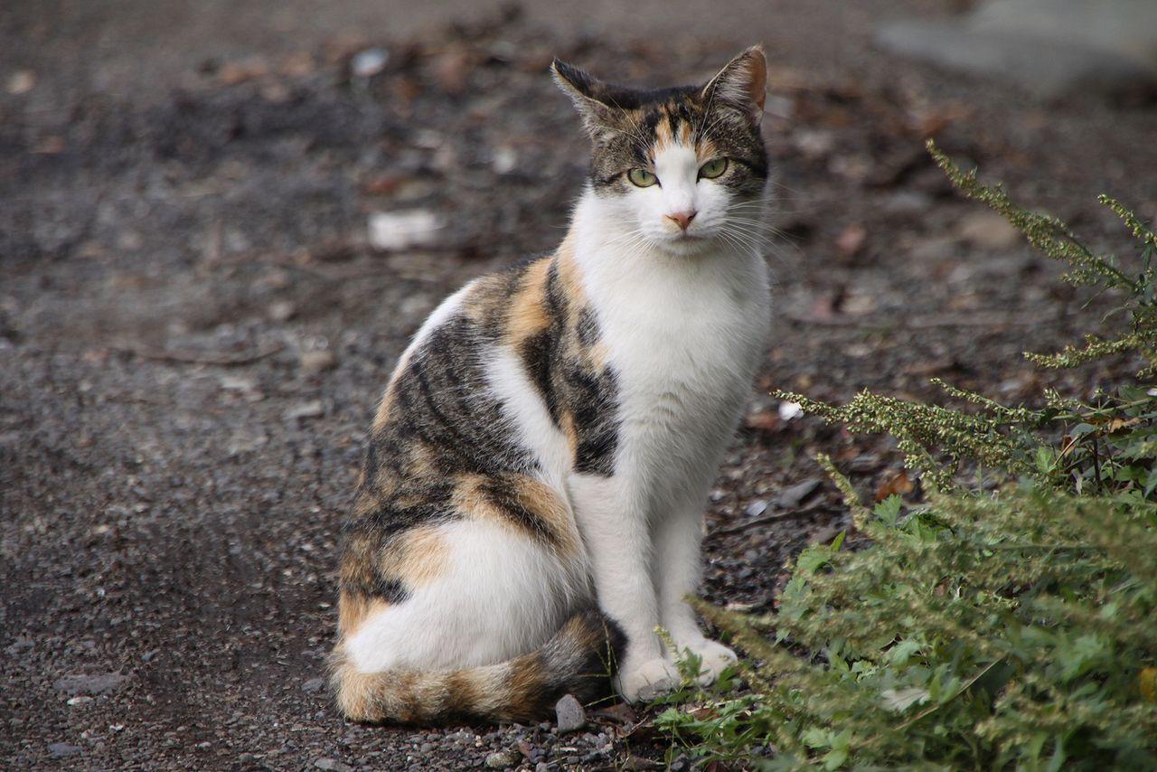 Warrior Cats Schneepelz Tof