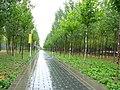 雨中的路 - panoramio.jpg