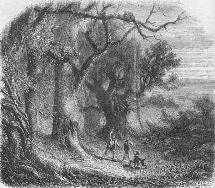 """ilustração, """"O escaravelho de ouro"""", Edgar Allan Poe"""