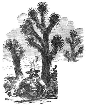 0-Sister Republic - Needle Palm p.448.jpg