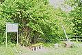 002 Naturdenkmal Wiedensee bei Scharzfeld in Niedersachsen 03.JPG
