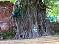021 Banyan Buddha (9183191106).jpg