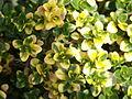 0305 Garten Eltern PICT4871.JPG