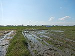 03306jfBirds Sanctuary Ducks Wetland Marshes Rice Fields Candaba Pampangafvf 05.JPG