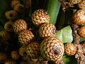 05704jfMidyear Orchid Plants Shows Quezon Cityfvf 14.JPG
