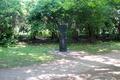 101756(Cramer-Denkmal)jw.tif