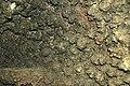 179 Coralloids 11 (8316549647).jpg