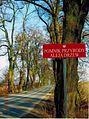 18-04-2010 ulica Meteorytowa - aleja drzew - pomnik przyrody.jpg