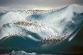 1989 eisberg-pinguine02 hg.jpg