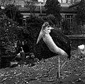 20.11.1961. Animaux au jardin des plantes. (1961) - 53Fi3079.jpg